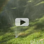 How Should I Water My Lawn